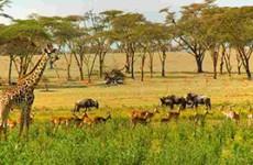 Amboseli & Tsavo Safari