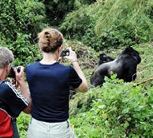 Once-in-a-Lifetime Gorilla Experience