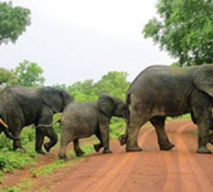 Ghana Wildlife & Culture