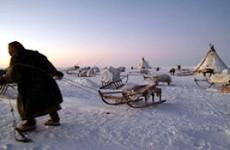 Nenet Migration Yamal Peninsula