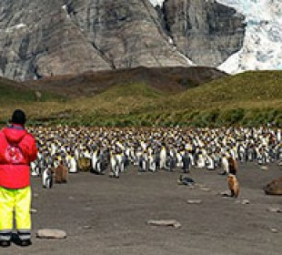 Antarctic Wildlife Adventure