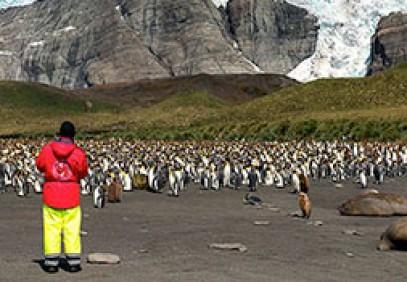 Antarctic Wildlife Adventure