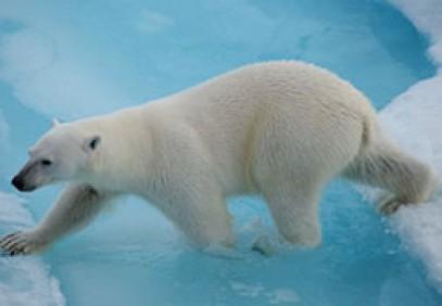 Arctic Wildlife Safari