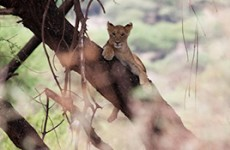 Tanzania Big Five Safari