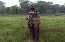 Wildlife Safari in Chitwan National Park