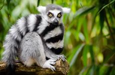 Wildlife Heritage of Madagascar