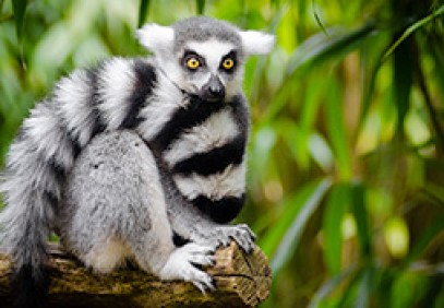 Wildlife Heritage of Madagascar