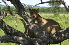 Classic Kenya and Tanzania Safari