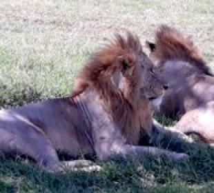 Samburu, Nakuru, Masai Mara Safari