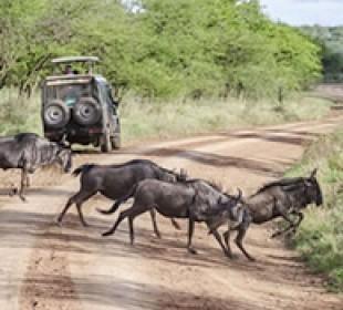 3 Day Wildebeest Migration Safari