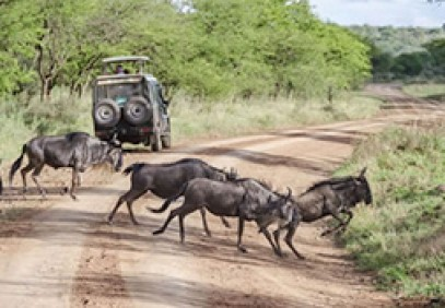 3 Day Wildebeest Migration Safari