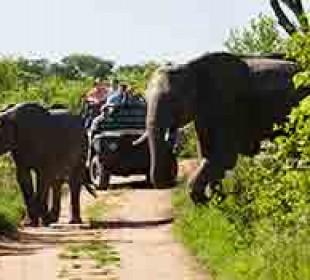 Octagon Safari: Classic Rwanda Safari