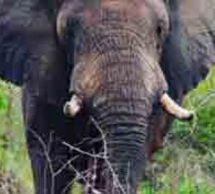 6 Days Rwanda Safari & Gorilla Trekking