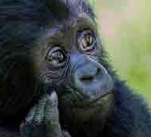 Classic Uganda Gorilla Trek
