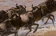 10-Day Kenya & Tanzania Budget Safari
