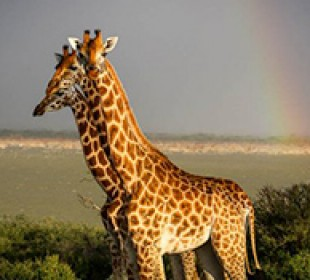 6-Day Uganda Private Wildlife Safari