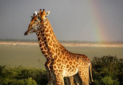6-Day Uganda Private Wildlife Safari
