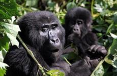 11-Day Uganda Private Wildlife Safari