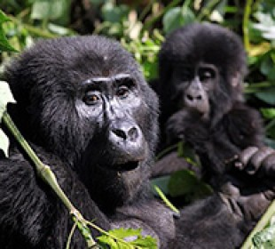 11-Day Uganda Private Wildlife Safari