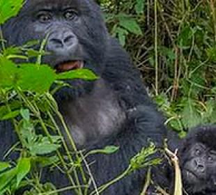 3 Day Uganda Gorilla Safari