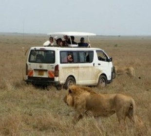 6-Day Masai Mara Nakuru National Park Experience