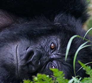 3-Day Gorilla Trekking Bwindi Impenetrable Forest