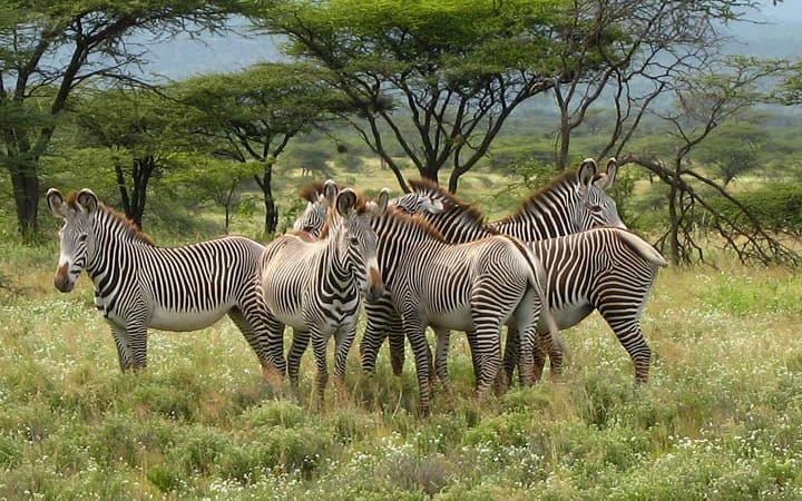 3 Day Samburu Game Reserve Safari 720x450