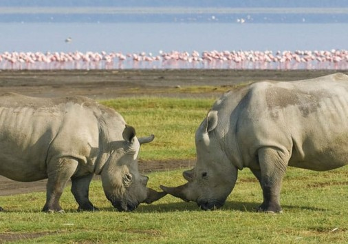 4 Days Kenya Wildlife Safari To Famous Masai Mara And Lake Nakuru