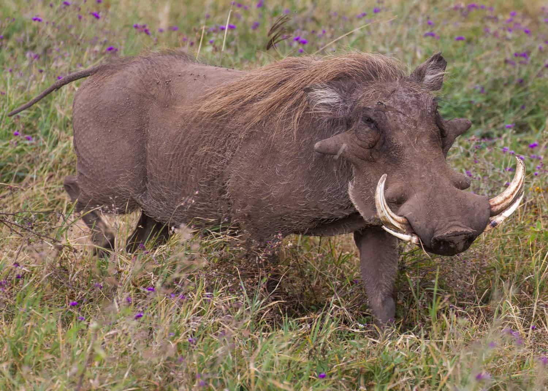 4days Tanzania Ngorongoro 28