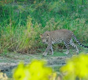Sri Lanka Wildlife Expedition