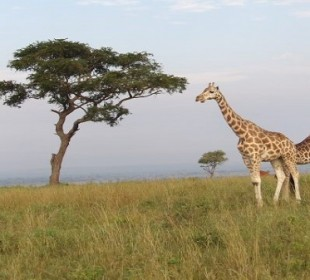 7-Day Wildlife Experience in Uganda