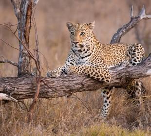 6-Day Tanzania Tented Camp Safari