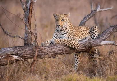 6-Day Tanzania Tented Camp Safari