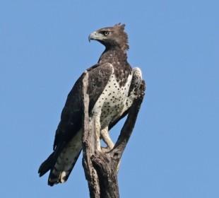 8-Day Tanzania Bird Watching Safari