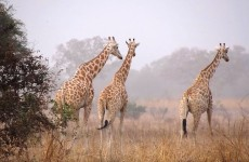 North Cameroon Safari