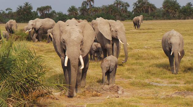 Amboseli Jb Family Elephant