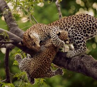 Uganda Septagon Safari: Lifetime Adventure