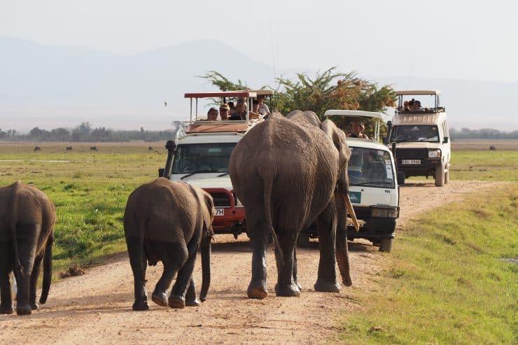 Amboseli 40 740x493