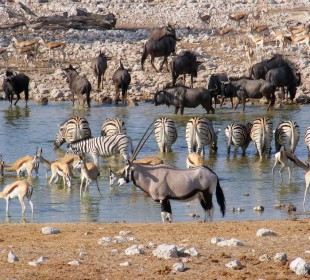 3-Day Etosha Camping Safari – Scheduled