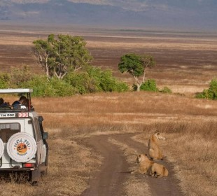 2 Day/1 Night Camping Safari