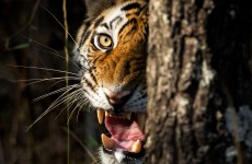Wildlife with Golden Triangle Tour