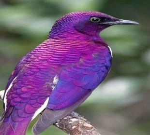 9-Day Kenya Ornithological Safari
