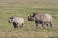 Tanzania Safari 4-Days