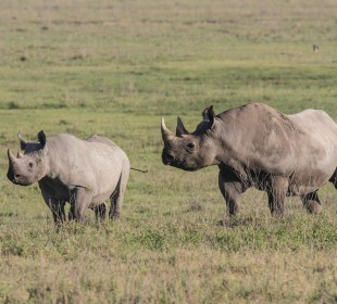 Tanzania Safari 4-Days