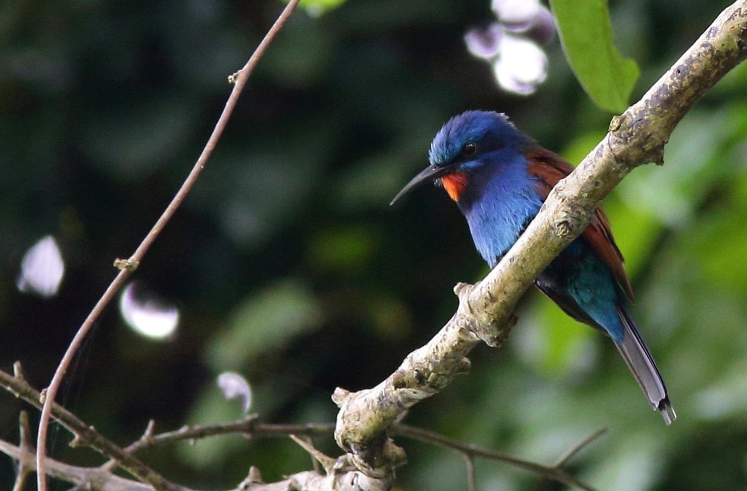 Ghana Birding Tours.