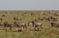 Impressive Tanzania Safari 5-Days