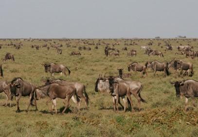 Impressive Tanzania Safari 5-Days
