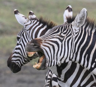 Tanzania Lodge Safari 6-Days