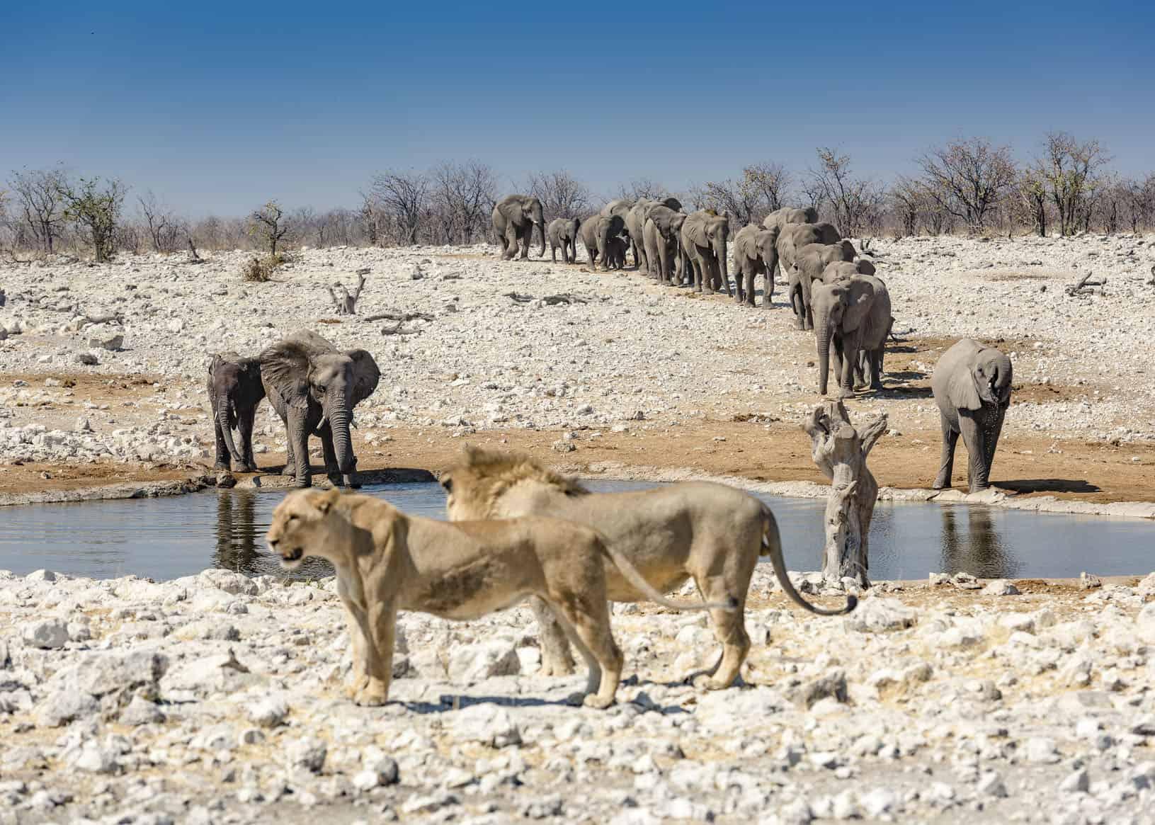 Wasserloch, Etosha National Park, Namibia