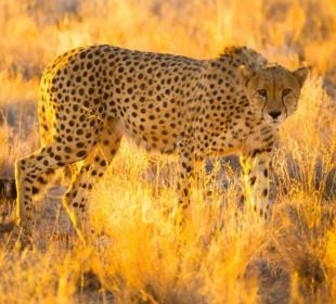 Etosha, Caprivi, Chobe & Victoria Falls Safari